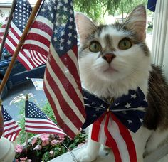 ^ Cupcake of the United States of Meowica wishes you a happy 4th! ☆ I Pledge Allegiance To The Flag…☆