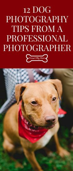 Ask The Experts: 12 Dog Photography Tips From A Professional Photographer