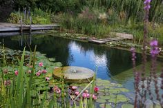 ECOlibrium Landscapes differs from the competition by providing easily sustainable landscapes through the use of native flora, recycled and locally sourced materials.We are dedicated to the ethos of sustainable landscaping/construction/living. Backyard Water Feature, Ponds Backyard, Garden Pool, Water Garden, Natural Swimming Ponds, Natural Pond, Swimming Pools, Building A Pond, Cool Pools