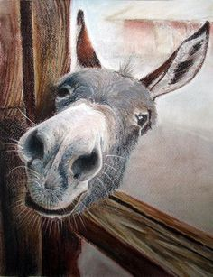 If you wonder what a donkey can eat, you can find all important feeding facts here. Take good care of your donkey with best information. Farm Animals, Animals And Pets, Funny Animals, Cute Animals, Wild Animals, Beautiful Creatures, Animals Beautiful, Cute Donkey, Mini Donkey