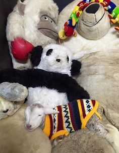 This little lamb misses her mother, but takes comfort in her stuffed animal family.