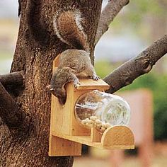 This squirrel feeder provides an unusually clear view of the squirrels that frequent it, because the bold critters actually climb inside the feed jar to eat Diy Garden Projects, Outdoor Projects, Wood Projects, Outdoor Decor, Garden Ideas, Woodworking Projects, Woodworking Inspiration, Backyard Ideas, Outdoor Living