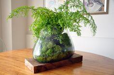 small green moss aquarium-like utopia Wood Canvas, Small Plants, Go Green, Wabi Sabi, Hand Painted, Contemporary, House Styles, Flowers, Indoor Gardening