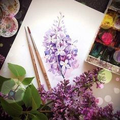 Watercolor art #lilacs