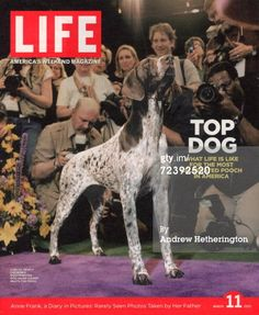 News Photo : Cover of Carlee a 5yearold German shorthaired...
