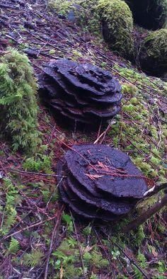 "dancingintherain80: "" Interesting fungi? """