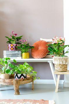 Anthurium Info - Alles over de anthurium snijbloem en potplant Tropical Interior, Bohemian Interior, Interior Styling, Interior Design, Tropical Colors, Deco Floral, Happy House, Painted Floors, Wall Colors