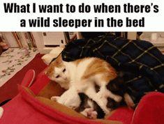 Wild Sleeper