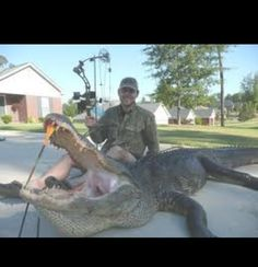 1. That is a huge gator 2. I am in awe that he killed with a bow. A BOW.