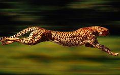 Speed incarnate.