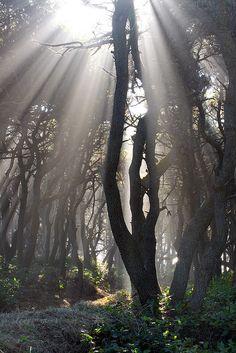 Speaking With Light, Oregon Coast, Washington, by Aaron Reed, on flickr.