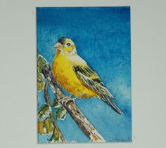 Watercolor Finch 8X10