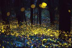 amazing #Fireflies in Japan ..pretty ❤ Source: Digital Photo Blog: ホタル
