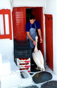 "Mykonos, Greece / Photo ""Mykonos"" by Javier García Mykonos Greece, Santorini, Wonderful Places, Beautiful Places, Visit Greece, Greece Islands, Mamma Mia, Paros, Tour Operator"
