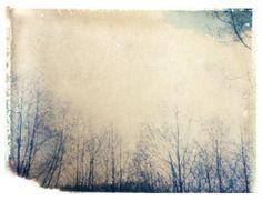 polarid print. #photography #trees