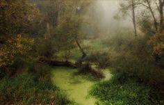 Belovezhskaya forest by Igor Denisov
