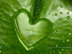 Heart dew drop