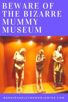 Beware of the most bizzare mummies you will ever see in the world! This unique exhibit is one of the most famous attractions in Mexico. Mummy Museum, Bonnie N Clyde, Exhibit, Movies, Movie Posters, Travel, Art, Art Background, Viajes