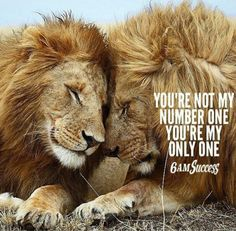 Relationship Principles No. Lion And Lioness, Lion Of Judah, Leo Quotes, Wisdom Quotes, Word Up, Lioness Quotes, Make Me Happy Quotes, Lion Couple, Lion Photography