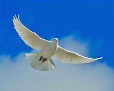 Személyes Blogom : A Megbocsátás