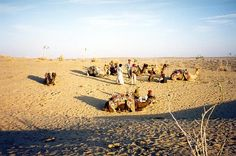 4-Night Golden Sands of Rajasthan Tour including Jaisalmer and the Sam Dunes 									On this 5-day tour of the exquisite desert region of India, see the majestic Mehrangarh Fort and Museum and Umaid Bhawan Palace atJodhpur, the setting sun over the sand dunes of Sam, the beautifully-carved merchants' mansions in the narrow lanes of Jaisalmer, andthe one-of-a-kind Golden Fort lit up at night. Enjoy folk music and dances on your tour and marvel at the Deshnok Temple on the way ...