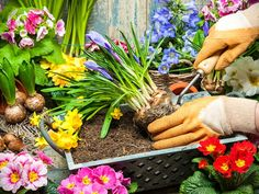Have a go at layered 'lasagne' planting bulbs in large containers for colour that lasts throughout late winter and spring.