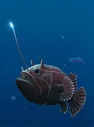 lantern fish - Google Search