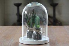 Stolp + Cactus