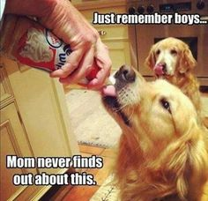 Mom never finds out funny memes animals dog puppy meme lol cute. humor funny  animals