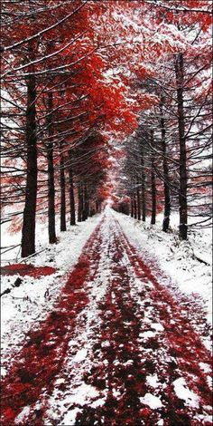 Where Autumn meets winter