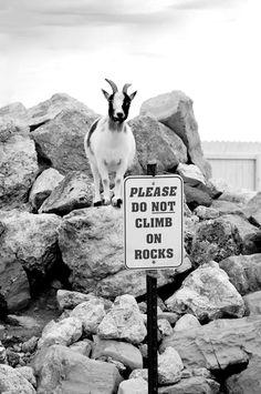 Nicht klettern und wer machts