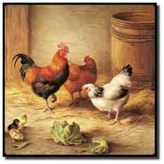 Hunt Rooster Chickens...
