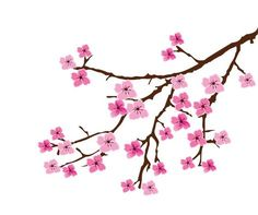 Cherry blossom vector image on VectorStock Cherry Blossom Images, Cherry Blossom Drawing, Cherry Blossom Vector, Cherry Blossom Watercolor, Sakura Cherry Blossom, Blossom Tree Tattoo, Blossom Trees, Tattoo Cherry Blossoms, Sakura Painting