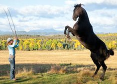 Horses of Heartland | Canadian Cowboy Country Magazine