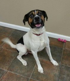Euthanasia Date: 12/12/14 Ernie is a male Boxer THIS DOG WILL NOT BE EUTHANIZED ON THE SPECIFIED DATE IF SPA read more