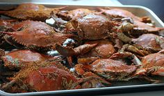 Maryland Chesapeake blue crab