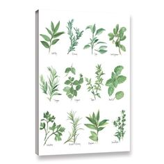 Found it at Wayfair - 'Herb Chart' by Chris Paschke Graphic Art on Wrapped Canvas in White/Green