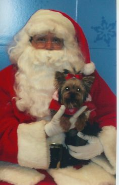Lily as a puppy on Santas lap