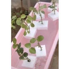 Garden Yard Ideas, Veg Garden, Vegetable Garden Design, Lawn And Garden, Garden Projects, Garden Plants, House Plants, Grafting Plants, Planting Flowers