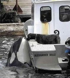 Whale Watching! Love this picture...