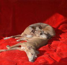 Cristal and Dior sunbathing
