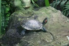 How to Make an Inside Pond for Turtles thumbnail