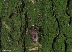 Kleine Wintervlinder  (Van vroegevogels)