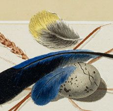 This is a Lovely Free Vintage Feathers Download! This one has so many pretty elements! Included are a Gray/White Speckled Egg, some Blue/Black and Yellow Feathers and some dried Grass or Grain. Such a nice Image for Spring. A very pretty picture for your Collage or Mixed Media Projects. If you like Bird Images, you might also like the Natural History Bird Kit found on our Premium Membership site HERE! For more fabulous Vintage Bird and Bird themed Images be sure and check out our 40 Free…