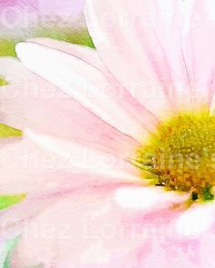 The Pink Daisy:  A Watercolor Fine Art Print, Minimalist Macro Floral Still Life Cottage Chic Home Decor