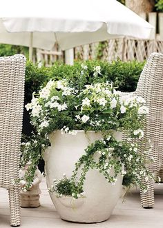 Thrilling About Container Gardening Ideas. Amazing All About Container Gardening Ideas. Moon Garden, Dream Garden, Garden Pots, Garden Ideas, Garden Bed, Container Plants, Container Gardening, Beautiful Gardens, Beautiful Flowers