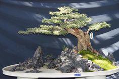 Bonsai Bonsai Art, Bonsai Garden, Bonsai Trees, Dwarf Trees, Miniature Trees, Growing Tree, Topiary, Ikebana, Japanese Art
