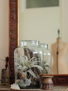 Tillandsia Terrarium | Flickr - Photo Sharing!