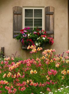 love the window box - we have same shutters but in black.