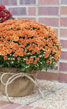 We've already told you how to get ready for an outdoor fall wedding, and today I'd like to be more specific and tell you of some cool fall backyard wedding . Potted Mums, Fall Mums, Autumn Fall, Autumn Leaves, Wedding Themes, Wedding Ideas, Boquette Wedding, Trendy Wedding, Wedding Colors